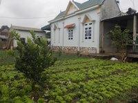 Vegetable Innovation Platform in Vietnam Bears Fruit – and Vegetables!