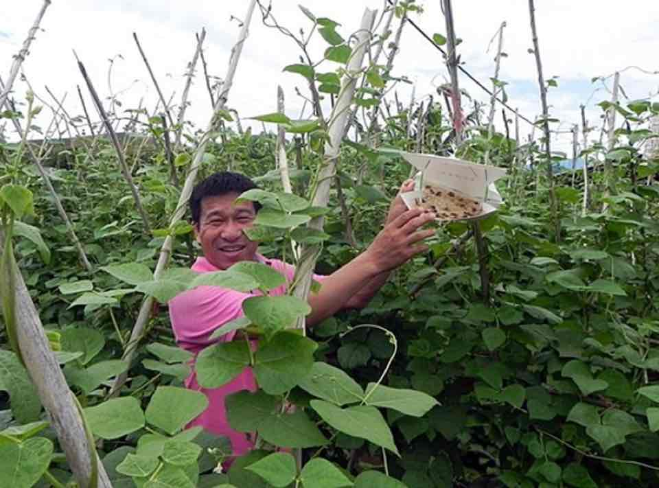 Hoang Van Chau from the Fruit and Vegetable Research Institute demonstrating the benefits of pheromone traps in an off-season vegetable trial in Mai Tien village.