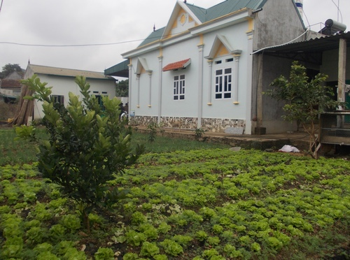 Vegetables intercropping is common in Northwest Vietnam.