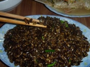 A local dish of fried stink bugs.
