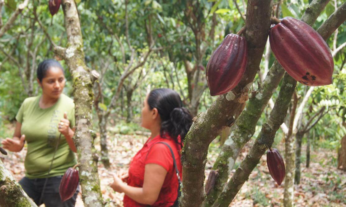 Marbelis Mairena and Rosa Peralta, cocoa farmers from Waslala, stroll through Rosa's plot discussing their cocoa management strategies. Photo by S.Azadegan/CIAT.