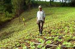 Humidtropics Contributes to Nicaragua's National Cocoa Development Plan