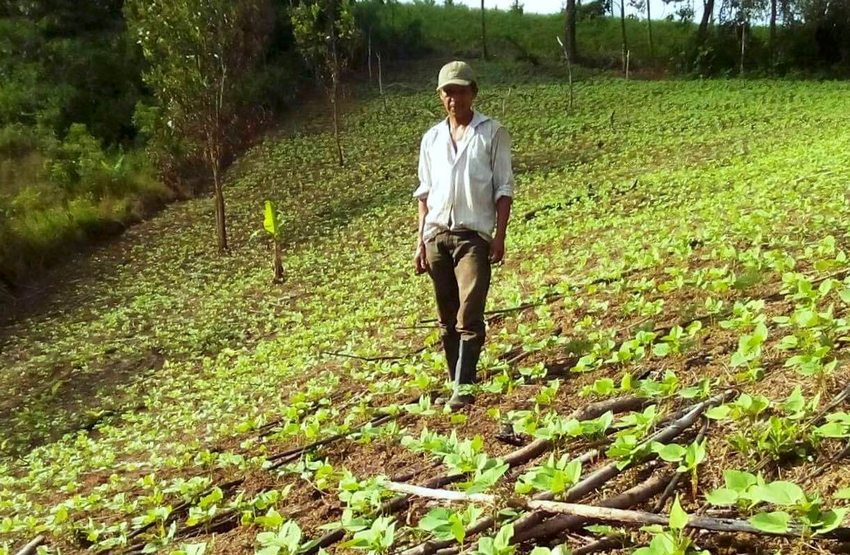 Farmer from Waslala surveys the plot where the high iron content beans he planted are growing. Photo by E.Rocha/CIAT/Humidtropics.