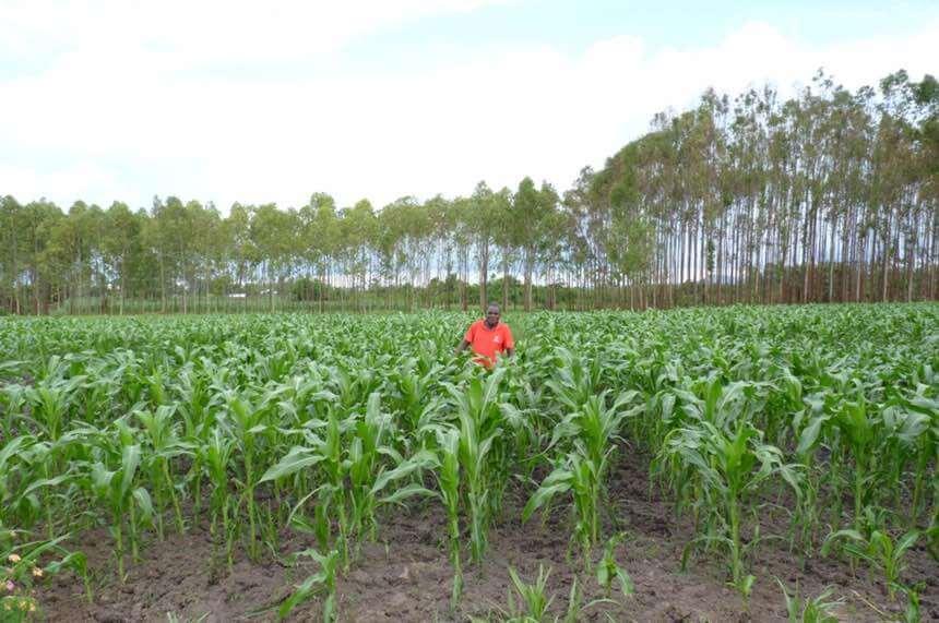 Rural maize farmer